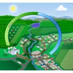 Същност на биогоривата (биомасата)
