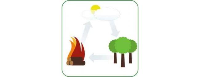 Какво представлява биомасата, как работят котлите на биомаса ?